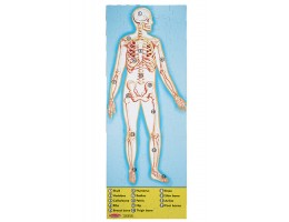 Human Body Floor Puzzle (100 pc)
