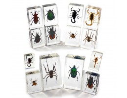Insect Nature Blocks (14/set)