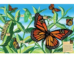 Life Cycle of a Monarch Butterfly Floor Puzzle (48 PC)