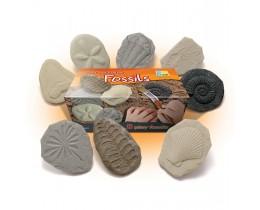Let's Investigate Fossils