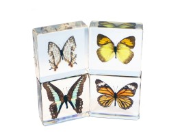 Butterfly Nature Block (4/set)