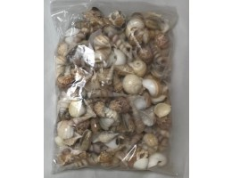 Medium Indian Mix Seashells